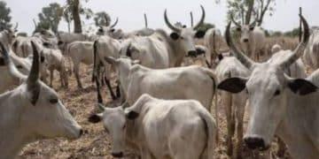 National Livestock Transformation Programme